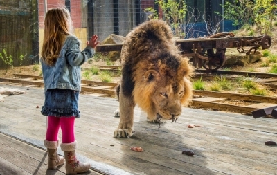Roaring success for new Romag zoo installation