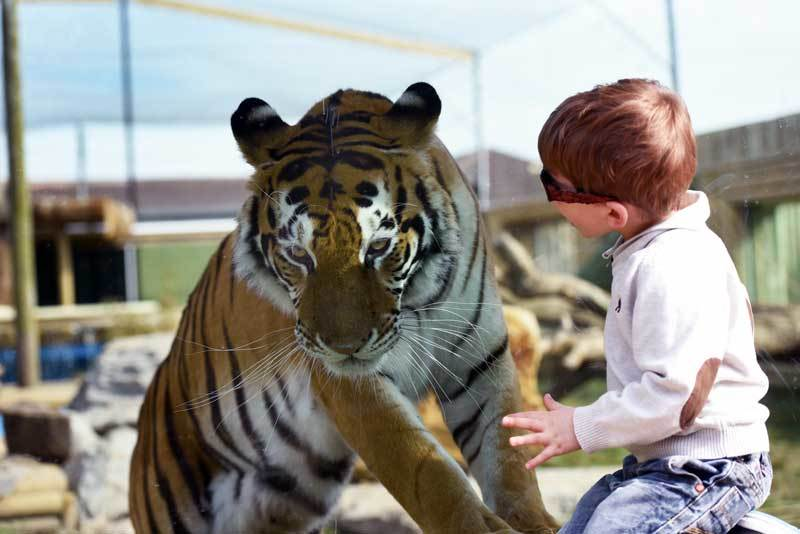 Laminated Glass - Zoo